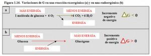 F.1.16. Variación de G exo y endoergónica