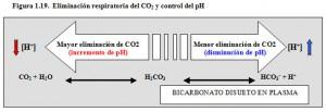 F.1.19. Tampón Bicarbonato