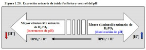 F.1.20. Tampón renal fosfato