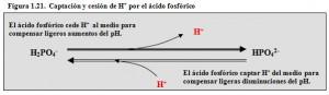 F.1.21. Tampón ácido fosfórico