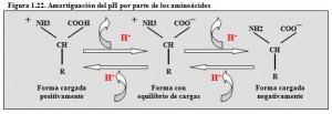 F.1.22. Tampón proteínas