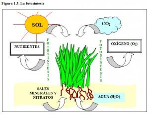 F.1.3. Fotosíntesis