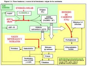 F.1.4. Fotosíntesis origen nutrientes
