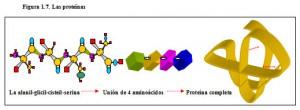 F.1.7. Proteínas