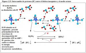 F.2.23. Intercambio protones fósforo agua