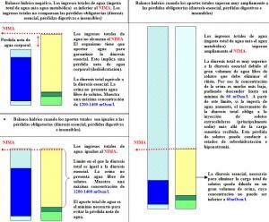 F.2.29. Balance agua solutos (2)