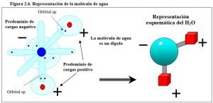 F.2.6. Molécula Agua