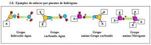F.2.8. Enlaces puentes Hidrógeno