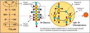 f-3-2-1-glucosa
