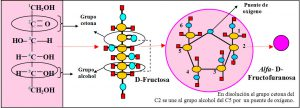 f-3-2-1-glucosa-fructosa-galactosa-ribosa