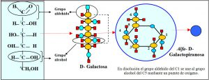 f-3-2-2-glucosa-fructosa-galactosa-ribosa