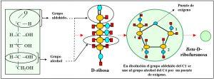 f-3-2-3-glucosa-fructosa-galactosa-ribosa
