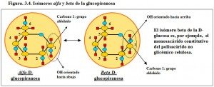 Figura 3.4. Isómeros alfa y beta glucopiranosa