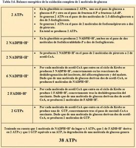 Tabla 3.6. Balance energético oxidación glucosa