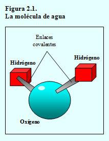 molécula agua