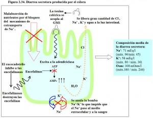 F.2.34. Diarrea secretora cólera