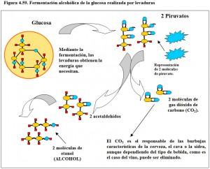 Figura 4.59. Fermentación alcohólica de la glucosa por levaduras