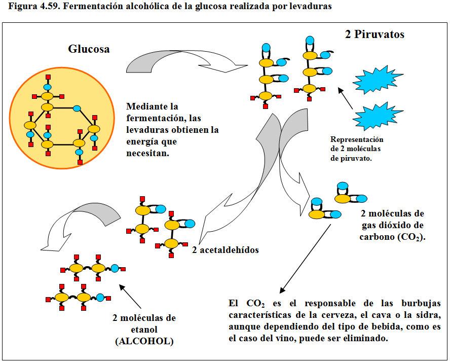 Mejor medicina para metabolismo glucogeno