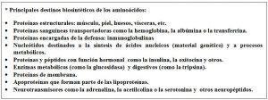 Destinos biosintéticos aminoácidos