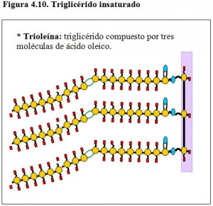 Figura 4.10. Trioleína