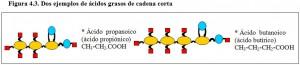 Figura 4.2. Dos ácidos grasos de cadena corta