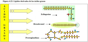Figura 4.22. Lípidos derivados de los ácidos grasos