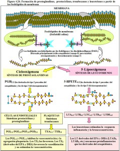Figura 4.26. Formación de prostaglandinas, prostaciclinas, tromboxanos y leucotrienos