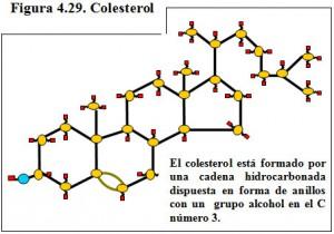Figura 4.29. Colesterol