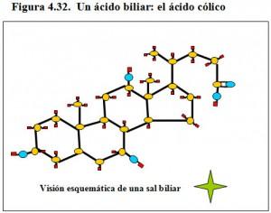 Figura 4.32. Ácido cólico