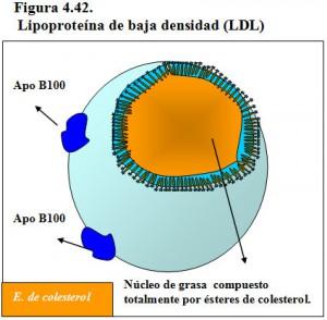 Figura 4.42. Lipoproteína de baja densidad