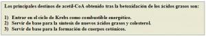 Figura 4.49.1. Betaoxidación ácidos grasos