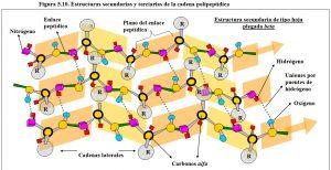Figura 5.10. Estructuras secundarias y terciarias de la cadena polipeptídica