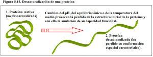 Figura 5.12. Desnaturalización de una proteína