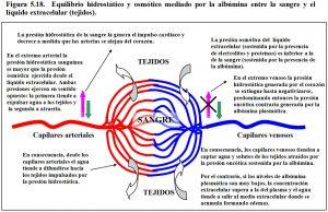 Figura 5.18. Albúmina equilibrio hidrostático y osmótico