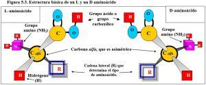 Figura 5.3. Estructura básica de un aminoácido