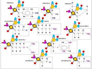 Figura 5.4. Estructura básica 20 aminoácidos (2)