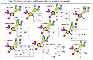 Figura 5.4. Estructura básica 20 aminoácidos