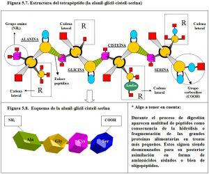 Figura 5.7. Tetrapéptido