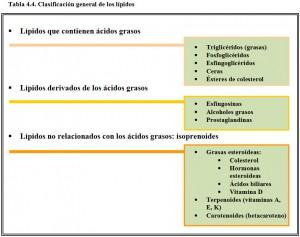 Tabla 4.4. Clasificación lípidos