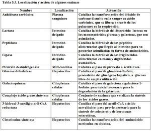 Tabla 5.3. Localización acción enzimas