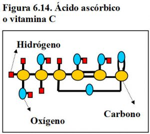 figura-6-14-acido-ascorbico-vitamina-c