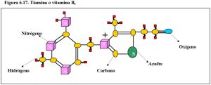 figura-6-17-tiamina-vitamina-b1