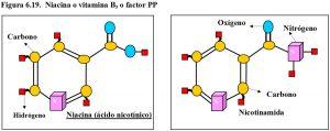 figura-6-19-niacina-vitamina-b3-factor-pp