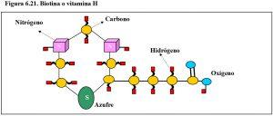figura-6-21-bioina-vitamina-h