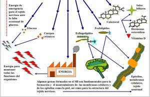 figura-6-22-1-metabolismo-intermediario-regulacion-vitaminas-grupo-b