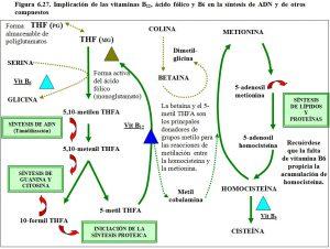 figura-6-27-vitmaninas-b12-b6-acido-folico-sintesis-adn