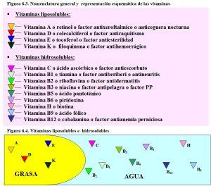 figura-6-3-nomenclatura-vitaminas