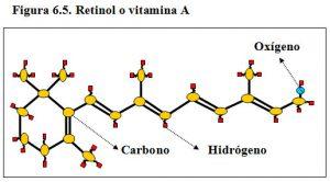 figura-6-5-retinol-vitamina-a