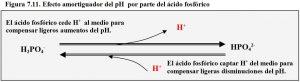 figura-7-11-amortiguacion-ph-acido-fosforico